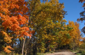 Trees alongside a dirt road in autumn shades against a brilliant blue sky